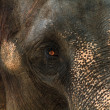 Asia elephant portrait — Stock Photo #19682249