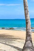 море и кокосовой пальмы — Стоковое фото