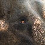 Asia elephant portrait — Stock Photo #20004987