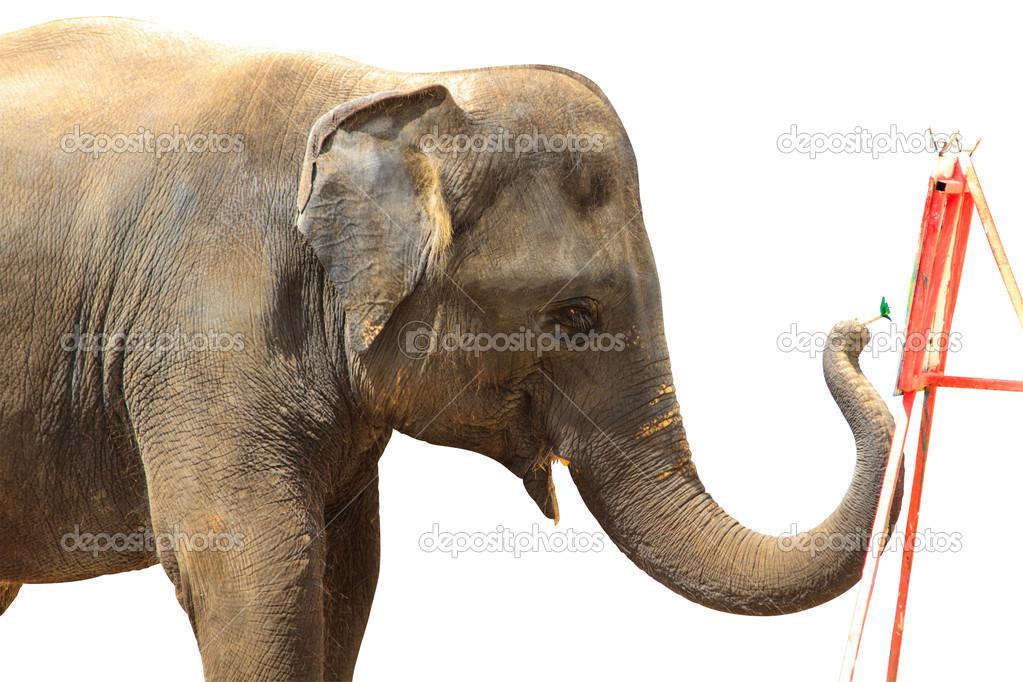 Painted Elephant Background Elephant Painting Isolated