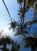 Cocoteros en jardín tropical — Foto de Stock