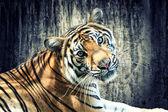 Tigre contra pared grunge — Foto de Stock