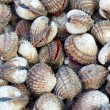 Sea shells clams - Stok fotoraf