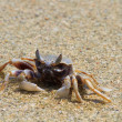 Stock Photo: Crab on the beach