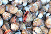 Sea shells clams in Thailand — Stock Photo
