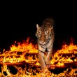 Stock Photo: Tiger in Blazing flames