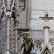 Gargoyle on Notre Dame Cathedral - Stock Photo
