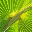 Green palm tree leaf — Stock Photo