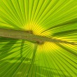 Royalty-Free Stock Photo: Green palm tree leaf
