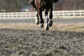 Galloping horse close up — Stock Photo
