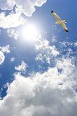 Uçan martı — Stok fotoğraf