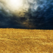 Wheat field on sunset — Stock Photo