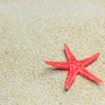 Starfish on the beach — Stock Photo #26777711