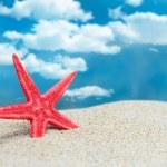 Starfish on the beach — Stock Photo #26805369