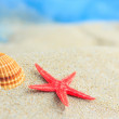 Sea shells on the sand — Stock Photo #30193025
