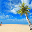 Tropical beach with coconut tree — Stock fotografie