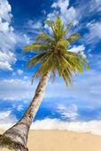Sea and coconut palm — Stok fotoğraf