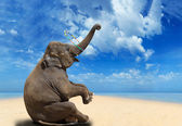 Elephant on the beach — 图库照片