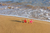 Starfish on the beach at sunrise — Stock Photo