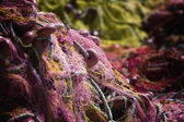 Fishing net. Marine background. — Stock Photo