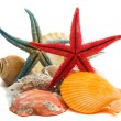 Stock Photo: Seashells and starfish isolated on white