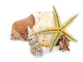 Conchiglie e stelle marine isolate su bianco — Foto Stock