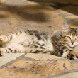 Kitten relaxing outdoors — Foto de Stock