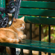 Ginger cat having a rest — Zdjęcie stockowe