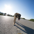 Stock Photo: Stray dog on road