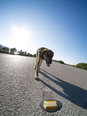 Stray dog on the road — Stock Photo