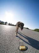 Stray dog on the road — Stock Photo