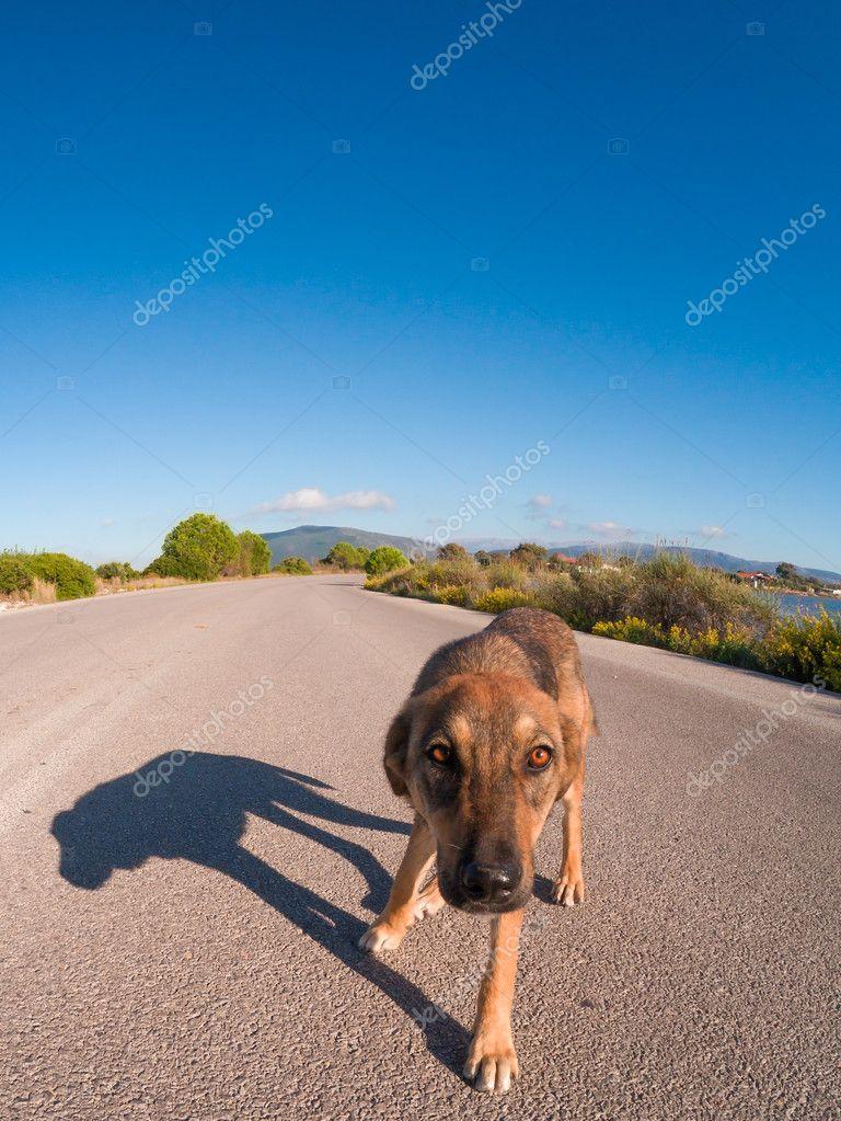 dog photo road - photo #44