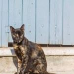 Cat in Mykonos — Stock Photo
