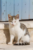 Cat in Mykonos — Stock Photo