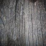 Old wood texture — Stock Photo #36294199