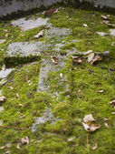 Old nameless tombstone in cemetery — Stock Photo