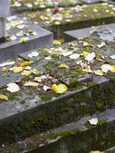 Old nameless tombstone in cemetery — ストック写真