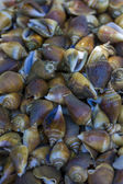 Periwinkles for sale at a market — Stock Photo