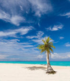 Tropical beach with coconut tree — Stock Photo