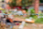 Barbed wire against nature bg — Stock Photo