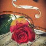 Violin sheet music and rose — Stock Photo #41504773