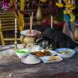 Stock Photo: Cat eating at Buddhist temple