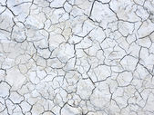Mud cracks dryness — Stock Photo
