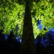Stock Photo: Tree in backlight