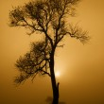 Tree in mist — Stock Photo