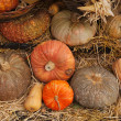Gourd — Stock Photo #28244499