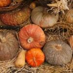 Gourd — Stock Photo
