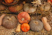 Gourd — Stock Photo