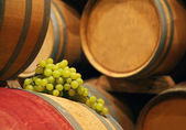 Wine barrels with grape — Stock Photo