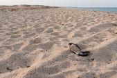 古いボロボロの靴の砂 — ストック写真